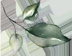 Illustrative leaf